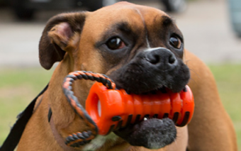 Zumby: Dental Device for Dogs To Combat Bad Breath