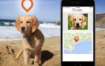 Where's Nellie: Smart Dog Tracker